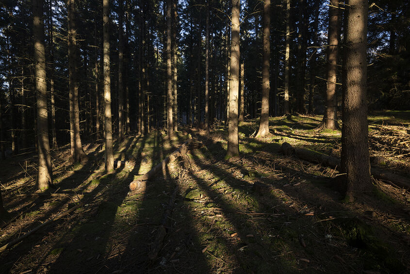 shadow realm, northbrae woods