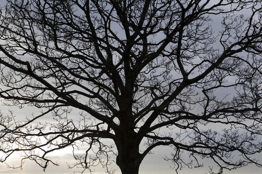 skeletal tree