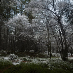 snow scene, rowantree woods