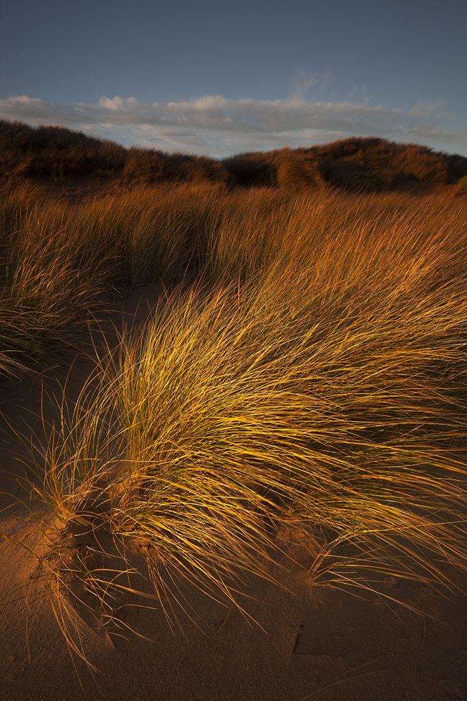 st combs dunes