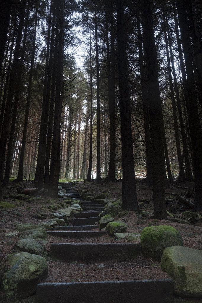 steps, millstone hill