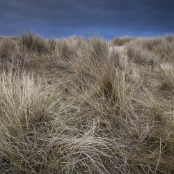 stormy skies and dunes