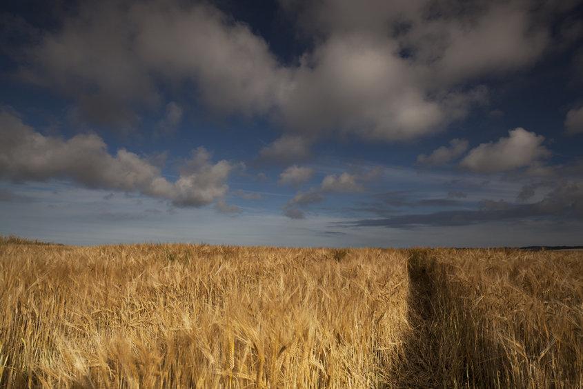 summer crops, montrose