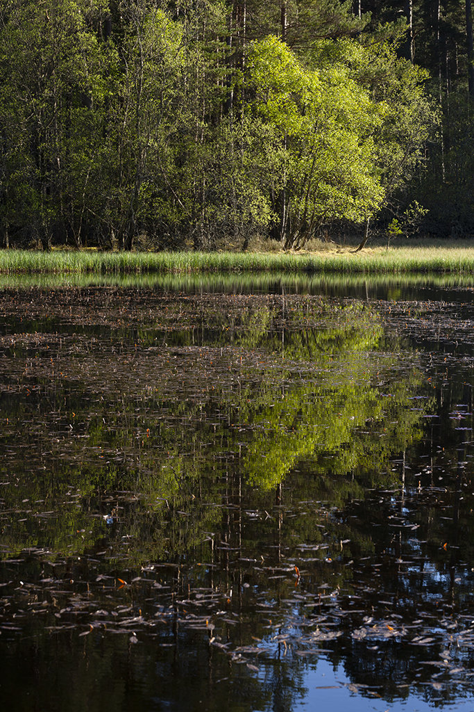 summer reflection, loch clarack
