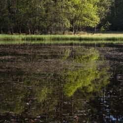 summer reflection, loch clarack