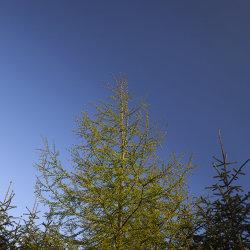 sunbathing, bruntyairds woods