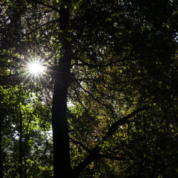 sunburst, fyvie woods