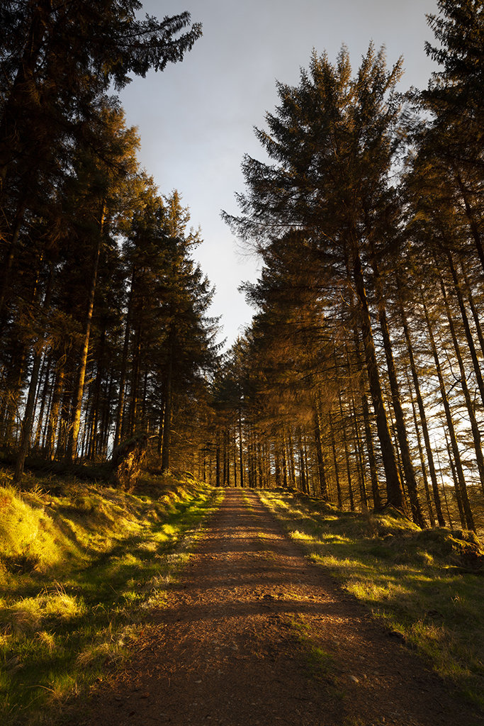 sunlit road, bruntyairds woods