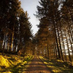 sunlit road, bruntyairds woods
