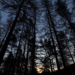sunrise in faskally woods