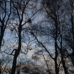 sunset, rowantree woods