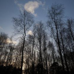sunset, warren woods