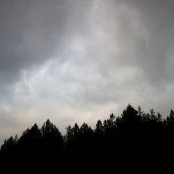 tentsmuir skyline