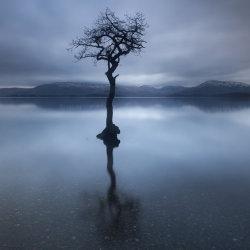 the milarrochy tree