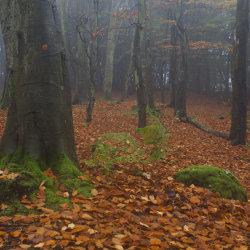 tollohill woods