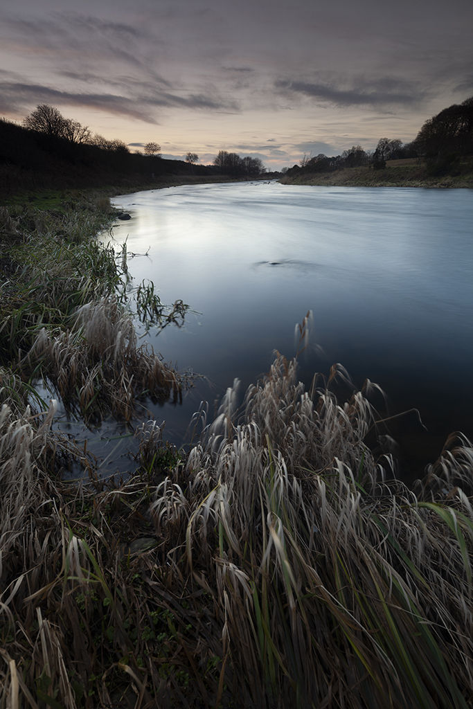 twilight reeds, river don