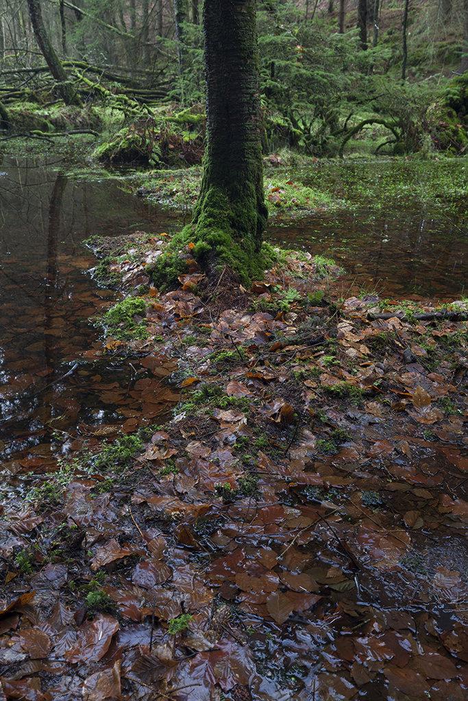 wet woods, castle fraser