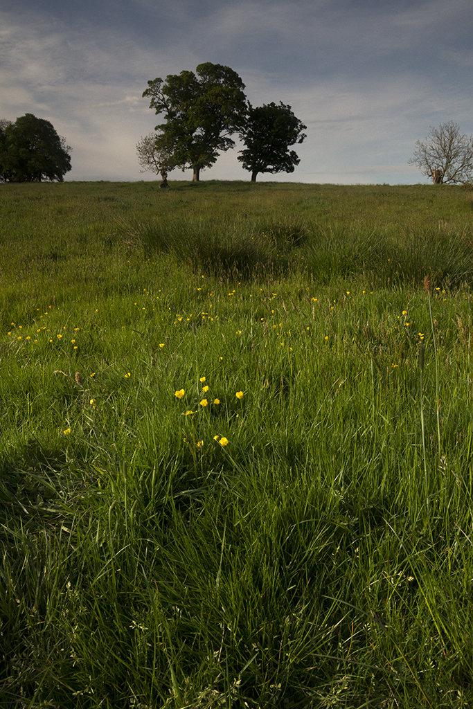 wildflowers, braes of gight