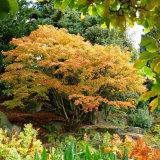Autumn Birmingham Botanic Gardens
