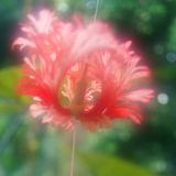 Blur Bloom