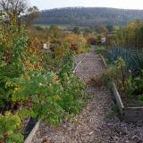 Craven Arms Community Garden (2)