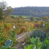 Craven Arms Community Garden (1)