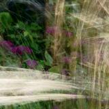 Grass and Sedum
