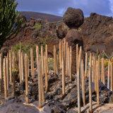 Jardin de Cactus (1)