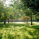 Late Summer Orchard