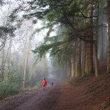 Lickey Hills Stroll