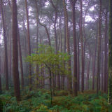 Lickey Hills Trees