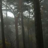 Lickey Hills Mist