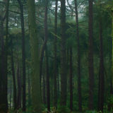 Lickey Hills Trees (2)