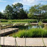Natural Swimming Pool 1