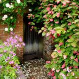 Packwood Garden Door