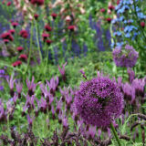 Purple Planting