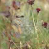 Seed Blur