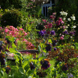 Isle Of Wight Garden