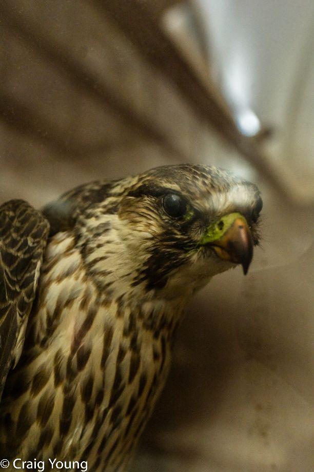 Bird (1 of 1)
