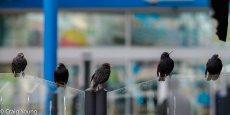 Birds 4 (1 of 1)