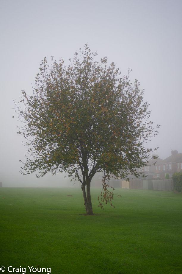 Fog 5 (1 of 1)