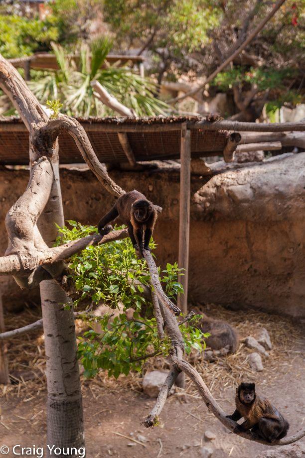 Monkeys (1 of 1)