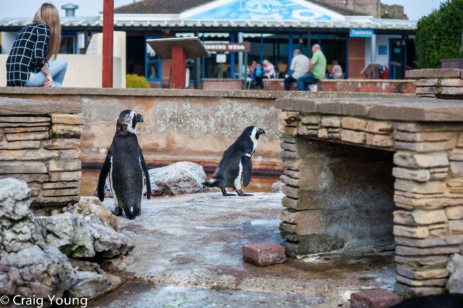 Penguins (1 of 1)
