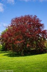 Tree 2 (1 of 1)