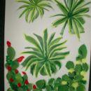 aloes & cactus