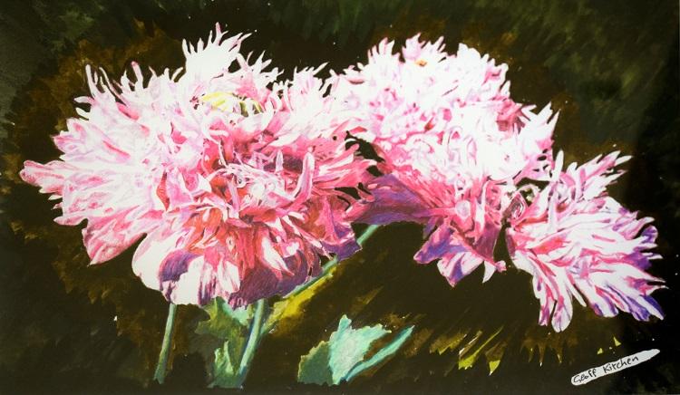 geoff kitchen pink opium poppies