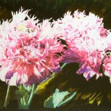 geoff kitchen pink opium poppies