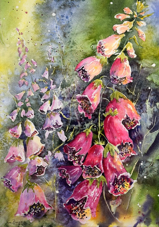 sue bunce foxgloves