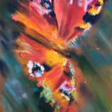 peacock butterfly - pastel