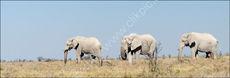 3 White elephants